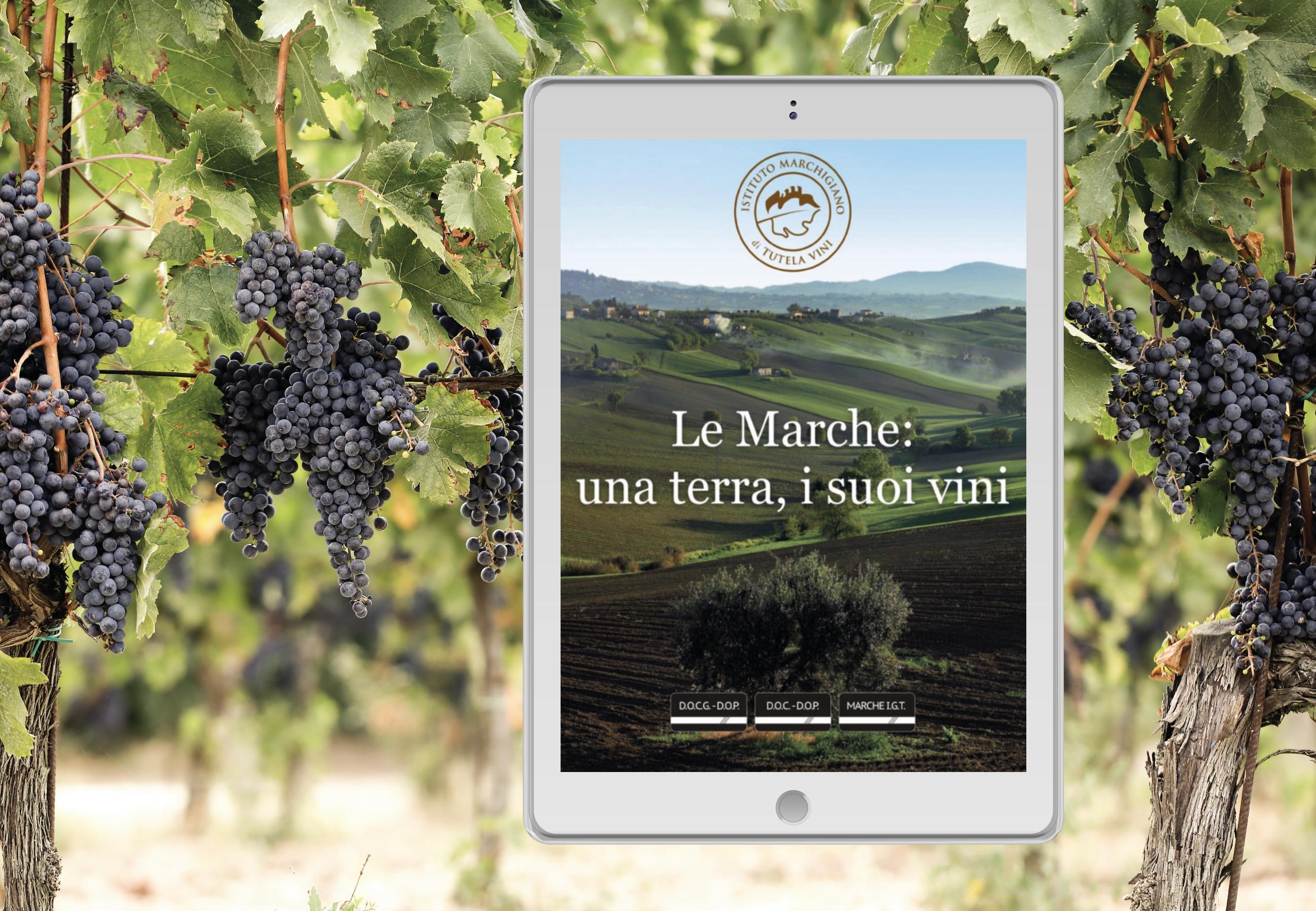 Le Marche, una terra i suoi vini